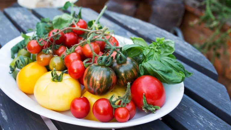 Tomato varieties look very different from each other.