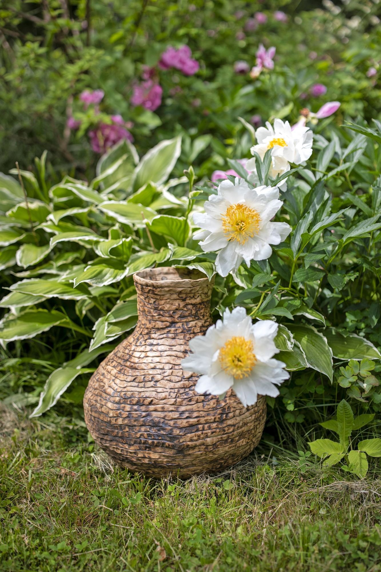 Peonies go well with the abundance of cottage garden style.  Simple peonies stay better upright than multiple varieties.  Pictured is the lush white-leafed peony variety Moon of Nippon.