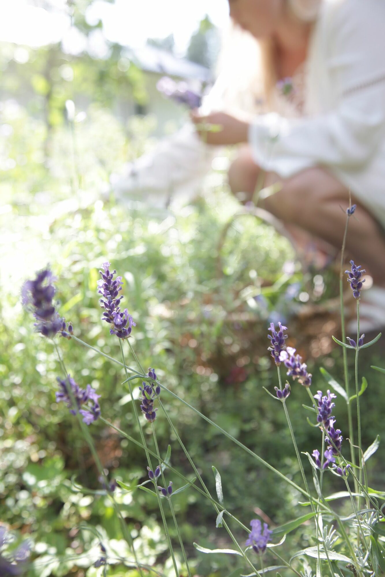 Edible flowers can also bring fragrance when they come.  Lavender blooms can be made into, for example, a charmingly fragrant tea.