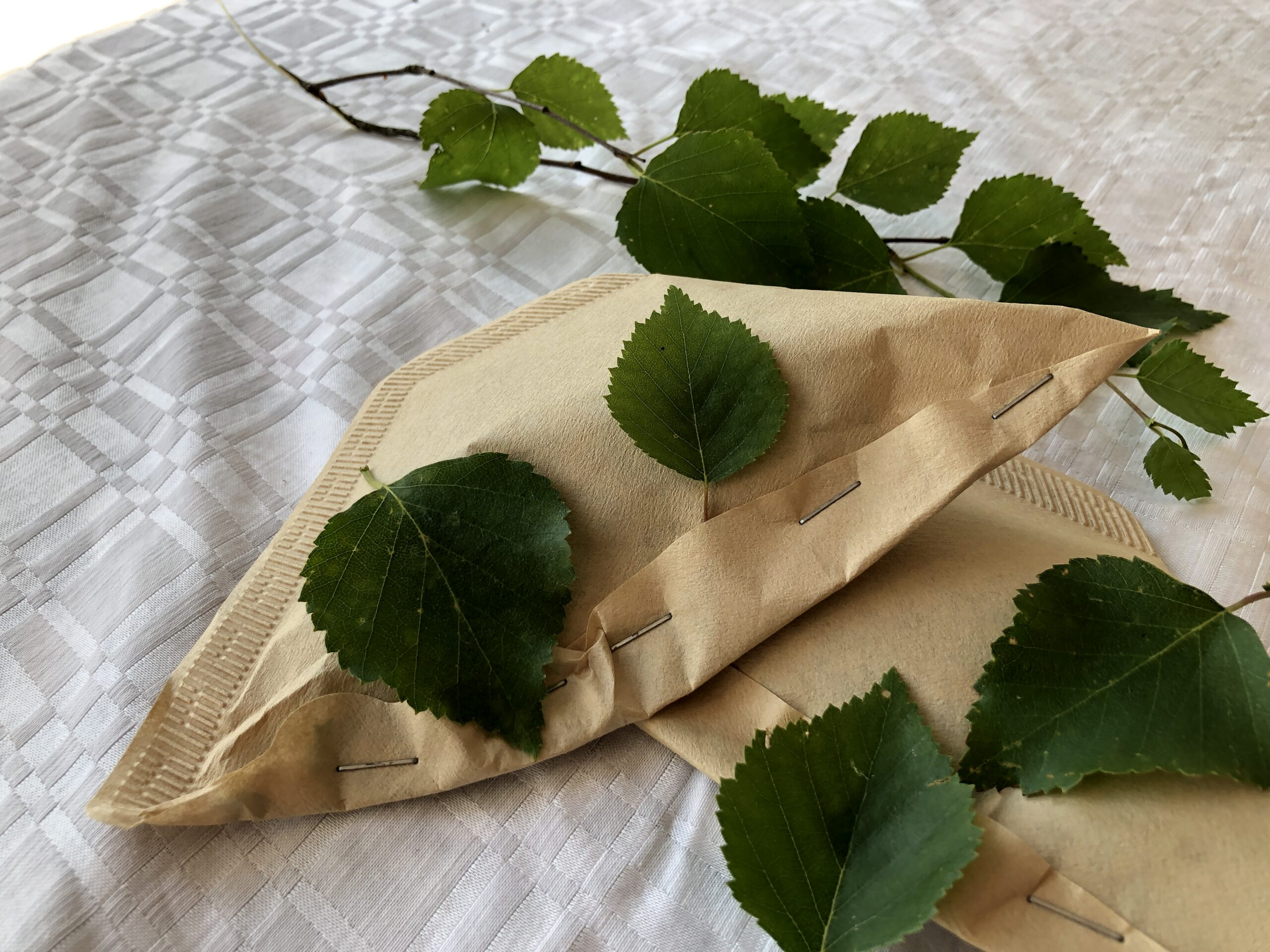 The leaves are well preserved in the freezer under the cover of a sealed filter bag.  Photo: Päivi Huotari